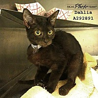 Adopt A Pet :: DAHLIA - Conroe, TX