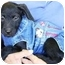 Photo 2 - Terrier (Unknown Type, Small) Mix Puppy for adoption in Coral Springs, Florida - Annie