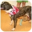 Photo 2 - Boxer Mix Dog for adoption in Cincinnati, Ohio - Bugger