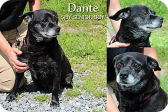 "Shih Tzu Mix Dog for adoption in MARION, Virginia - ""Smokey"" (was Dante)"
