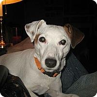 Adopt A Pet :: Julius - Thomasville, NC