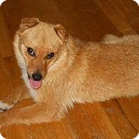 Adopt A Pet :: Lexi - dewey, AZ