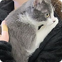 Adopt A Pet :: Rufus - Riverhead, NY
