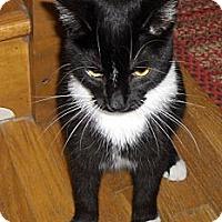 Adopt A Pet :: Belle - Richmond, VA