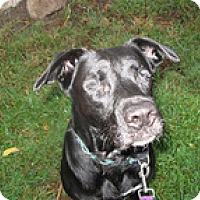 Adopt A Pet :: Rayce - Madison, WI