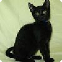 Adopt A Pet :: Pierre - Powell, OH