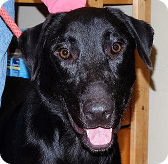 Labrador Retriever Mix Dog for adoption in Spokane, Washington - Keystone