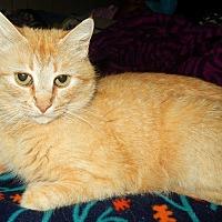 Adopt A Pet :: Gaea - O'Fallon, MO