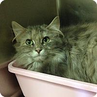 Adopt A Pet :: T-5 - Triadelphia, WV
