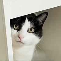 Adopt A Pet :: Scotty - Coronado, CA