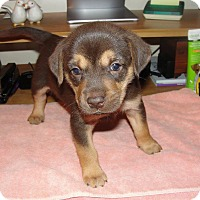 Adopt A Pet :: Hershey - Bowie, MD