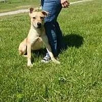 Adopt A Pet :: Tramp - Trenton, MO