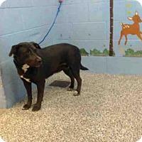 Adopt A Pet :: CECE - San Bernardino, CA