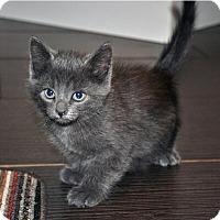 Adopt A Pet :: Pavel - Mississauga, Ontario, ON
