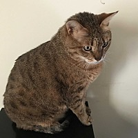 Adopt A Pet :: Sasha - Frankfort, IL
