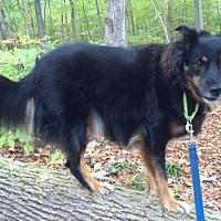 Adopt A Pet :: Freddy - Doylestown, PA