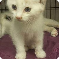 Adopt A Pet :: Silk - Savannah, GA