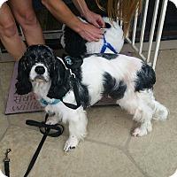 Adopt A Pet :: Benny - Santa Barbara, CA