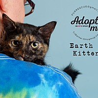Adopt A Pet :: Earth A Kitten - Pearland, TX