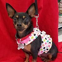 Adopt A Pet :: Queenie Cookie - Phoenix, AZ