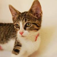 Adopt A Pet :: Synder - Toccoa, GA