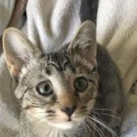 Adopt A Pet :: Darlene - Independence, MO
