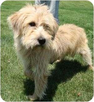 Terrier (Unknown Type, Medium) Mix Dog for adoption in Harrisonburg, Virginia - Sable