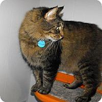 Adopt A Pet :: Duncan - Grand Rapids, MI