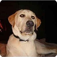 Adopt A Pet :: Paws - North Jackson, OH