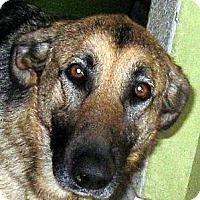 Adopt A Pet :: Gypsy - Oakley, CA