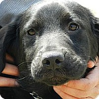 Adopt A Pet :: Sammy - Clinton, ME