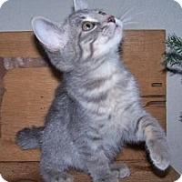 Adopt A Pet :: K-Lillian8-Dale - Colorado Springs, CO