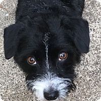 Adopt A Pet :: Keva - Adoption Pending - Gig Harbor, WA