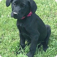 Adopt A Pet :: Dolly 💜 ADOPTED! - Saratoga Springs, NY