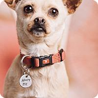 Adopt A Pet :: Juno - Portland, OR