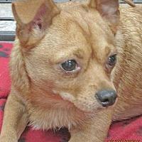Adopt A Pet :: Lucky - Conroe, TX