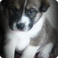 Adopt A Pet :: Diggy - Dallas, TX