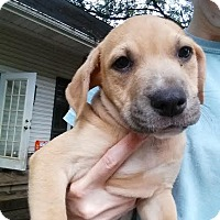 Adopt A Pet :: Jim - Manchester, NH