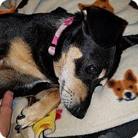 Adopt A Pet :: Helen - Gulfport, MS