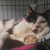 Adopt A Pet :: Candice - New Freedom, PA