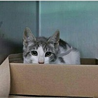 Adopt A Pet :: SAMUEL - Bridgewater, NJ