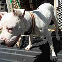 Adopt A Pet :: Zena - Newnan City, GA