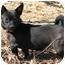 Photo 2 - Chihuahua Dog for adoption in EASLEY, South Carolina - *TWINKY*