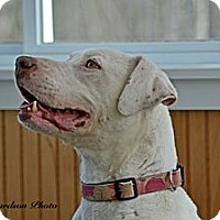 Adopt A Pet :: Lady - PENDING, in Maine! - kennebunkport, ME