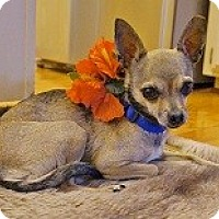 Adopt A Pet :: LEELA - AUSTIN, TX