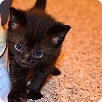 Adopt A Pet :: Orbit - Xenia, OH