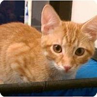 Adopt A Pet :: Oatmeal - Greenville, SC