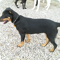 Adopt A Pet :: Mercedes - Norman, OK