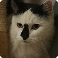 Adopt A Pet :: Hoda - Canoga Park, CA