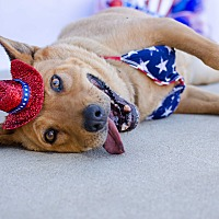 Adopt A Pet :: Cinnamon - Acton, CA